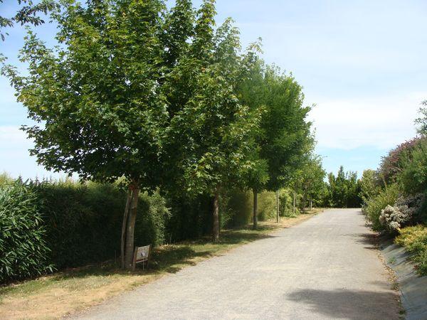 Arbres pour votre jardin p pini re en ligne for Arbre decoratif pour jardin