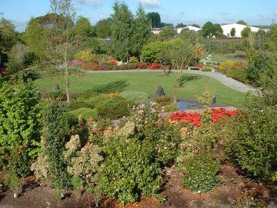 Arbustes pour votre jardin p pini re en ligne for Pepinieres en ligne