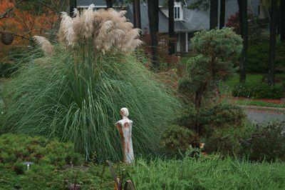Cortaderia selloana pumila herbe de la pampa gramin es - Herbe de la pampa prix ...