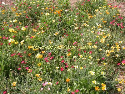 Graines biodiversifi es pour jardin pepini re en ligne for Pepinieres en ligne