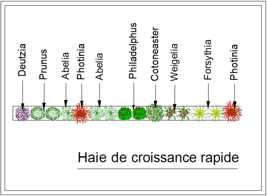 Haie croissance rapide kit haie - Arbres a croissance rapide et feuillage persistant ...
