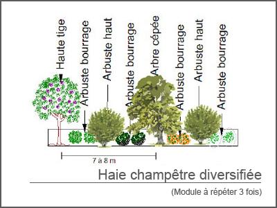 Kit de haie champ tre diversifi e kit haie bocag re - Planter une haie coupe vent a croissance rapide ...
