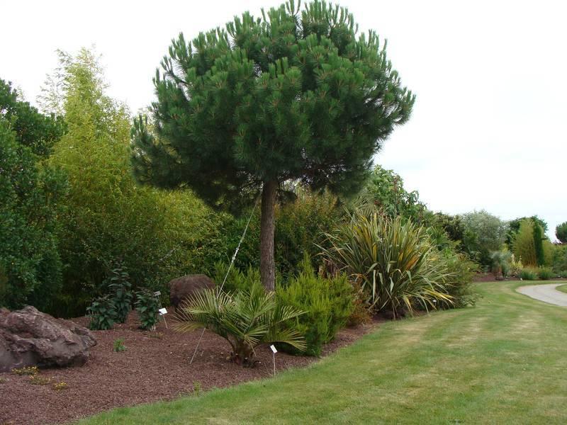 Que planter sous les pins for Www jardiner malin fr