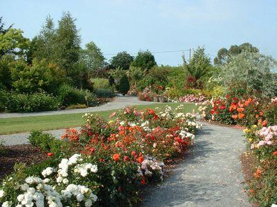 Rosiers pour votre jardin pepini re en ligne for Pepinieres en ligne