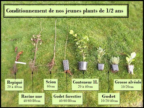 Guide d 39 achat qu 39 est ce qu 39 un jeune plant p pini res for Acheter des plantes par internet