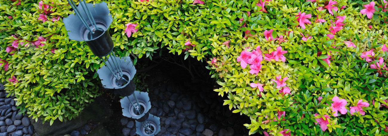 Entretien azale exterieur takaplanter kit plantes for Plantes exterieur sans entretien