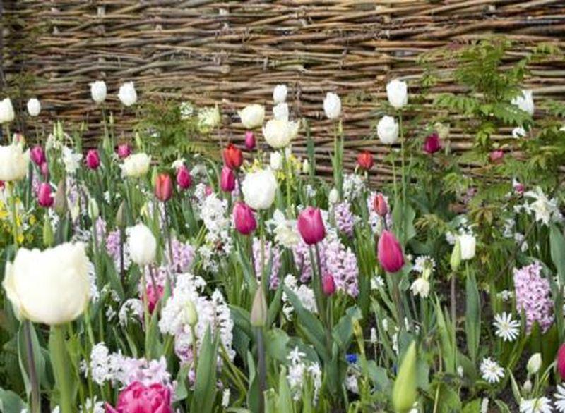 Les bulbes de printemps plantez d s l 39 automne ceux qui - Planter des tulipes en mars ...