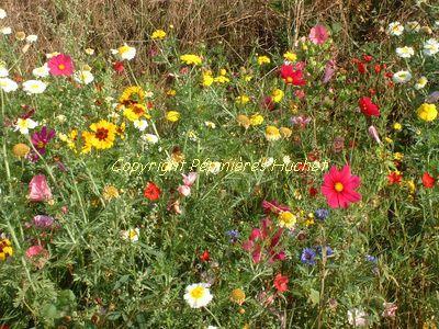 M langes fleuris d co pour jardin pepini re en ligne for Pepinieres en ligne