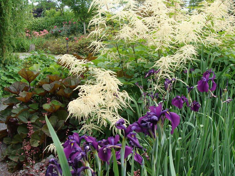 Boutique de plantes vivaces p pini res huchet - Bulbes a floraison automnale ...