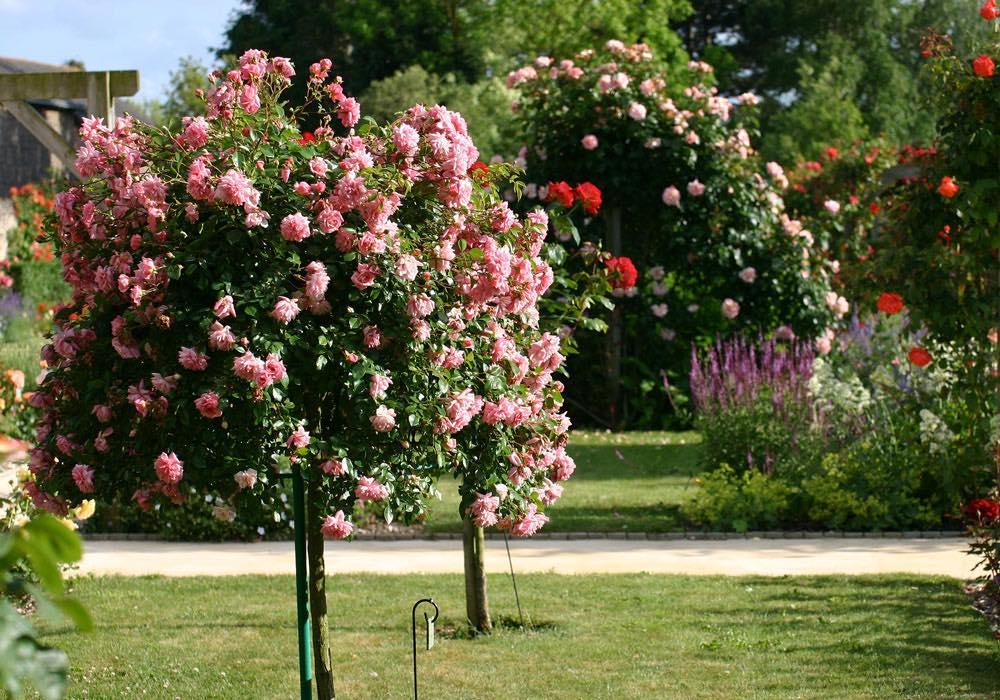Le blog p pini res huchet conseils en jardinage for Jardin que planter en novembre