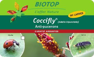 Boite_Coccifly_80_larves