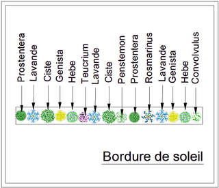 - Kit de haie : Bordure au soleil - 15 plants - Kit haie basse