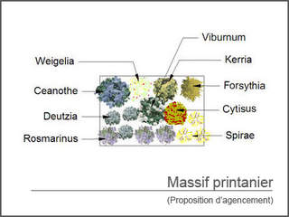 - Kit de massif : Massif printanier - 15 plants - Massifs