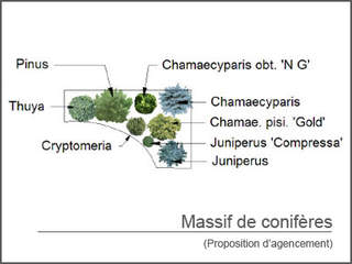 30 massif-coniferes