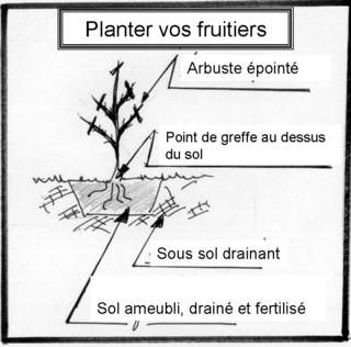 Planter vos fruitiers