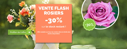 vente-flash-rosier-30-newsletter